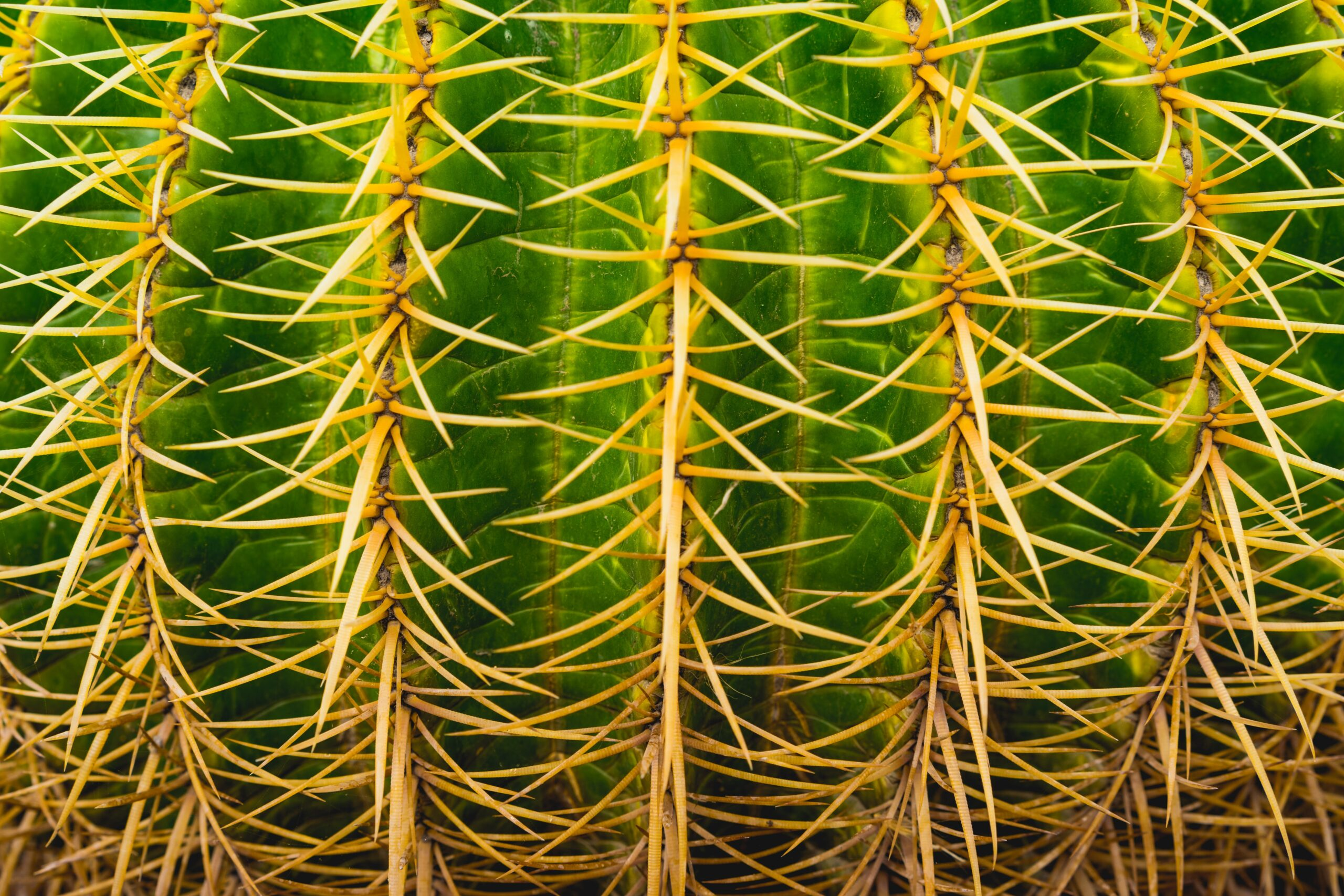 meaning of cactus
