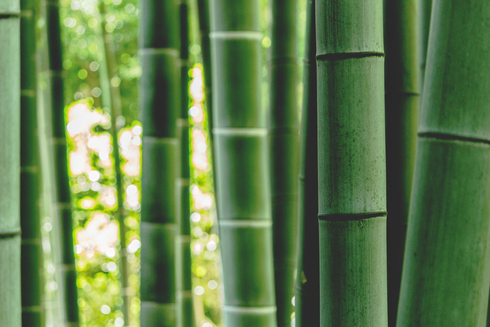 How to Grow Garden Bamboo